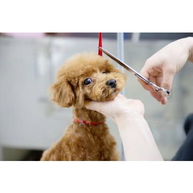 Animal World NICO PET 横浜瀬谷店