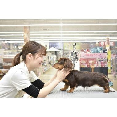 ホームセンタームサシ金沢南店