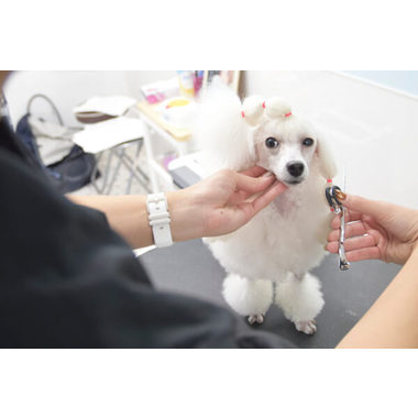 Dog Salon Li&S
