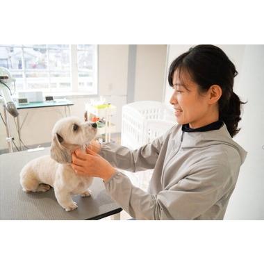 Dog Hair ハチミツ