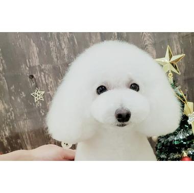 Dog Salon WAN WAY