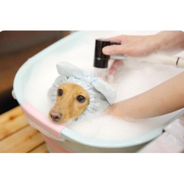Dog salon M-Heart