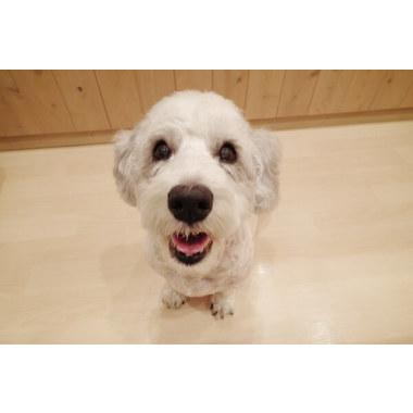 Dog Salon ポケット