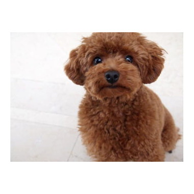 Dog Salon niji