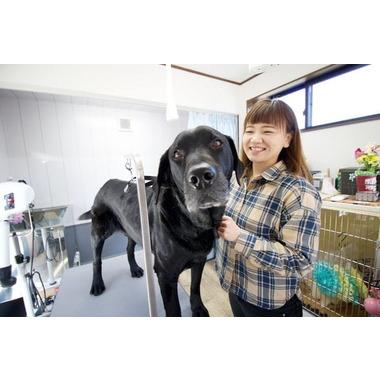 Dog Salon LUCK