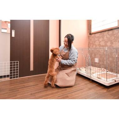 DOG SALON HAPPY SEVEN(ホテル)
