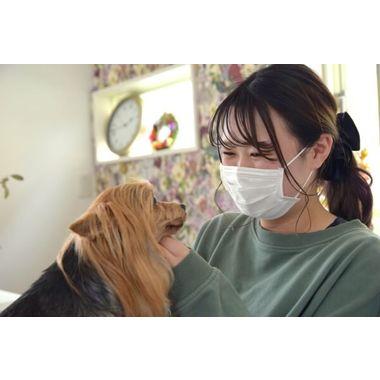 dog salon Anvy laz