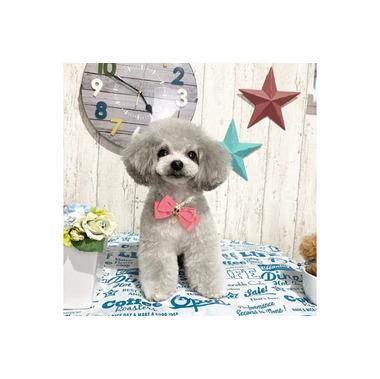TWINKLESNOW & トリミングサロン petit dog
