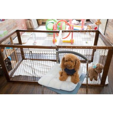 Dog Select(ホテル)