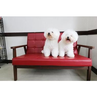 Dog salon CROWN