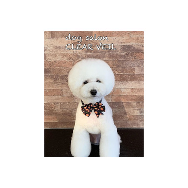dog salon CLEARVEIL