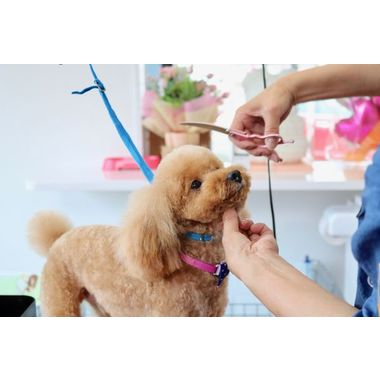 dog salon CLEARVEIL