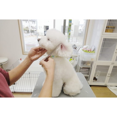 Dog Salon LEAD