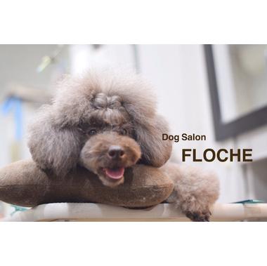 FLOCHE