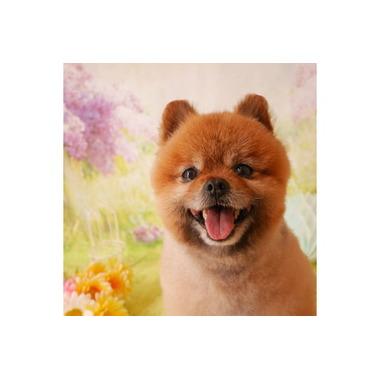 Dog salon 「Kiri」
