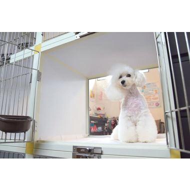Dog Salon Olive(ホテル)