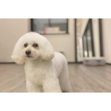 Private dog salon atelier elgreco