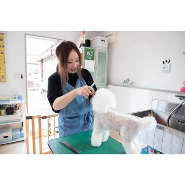 Dog Salon Hygge