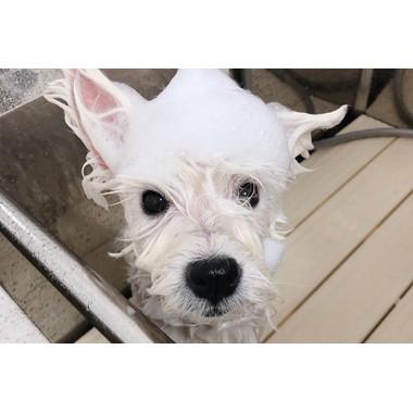 dog salon Parfait