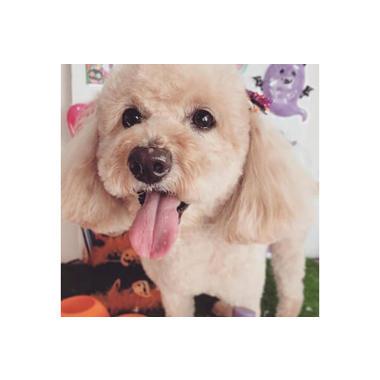 dog salon ミルミル