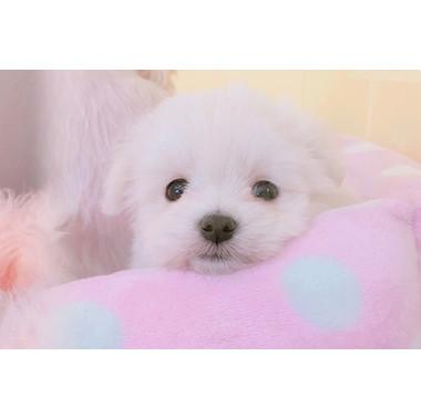 Prettydog CanCan