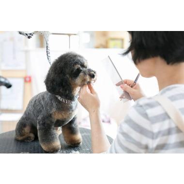 ペットサロン perro&gato 上杉店