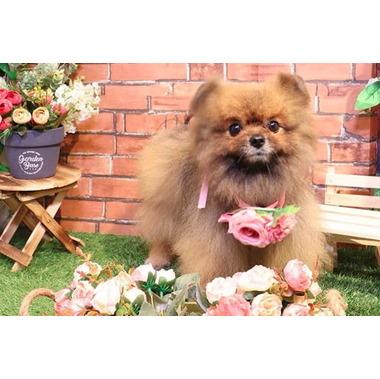 Bloomin' Dog
