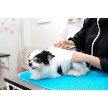犬の美容室 ジュニア倶楽部