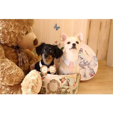 dog salon ChouChou(ホテル)