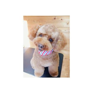 犬の美容室Passo