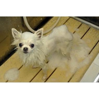 Dog care salon Smooch