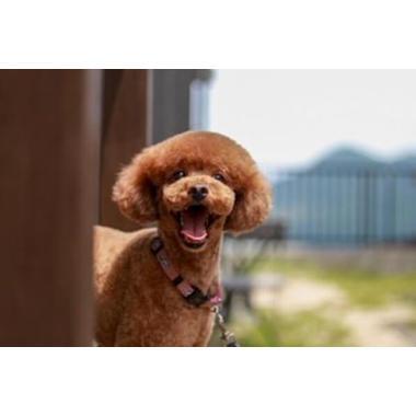 Dog Salon Sunny(ホテル)