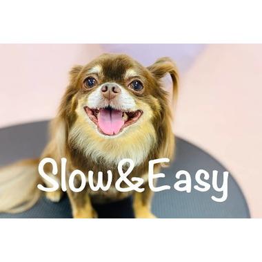 Dog Salon Slow&Easy