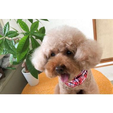 愛犬美容室セシル