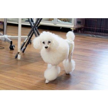 Dog Salon TaNa