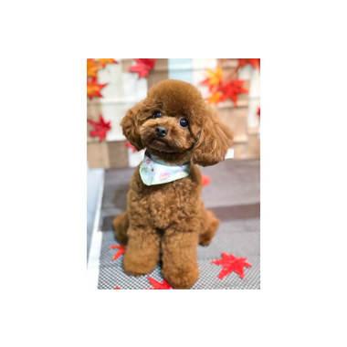 dog salon clover(ホテル)