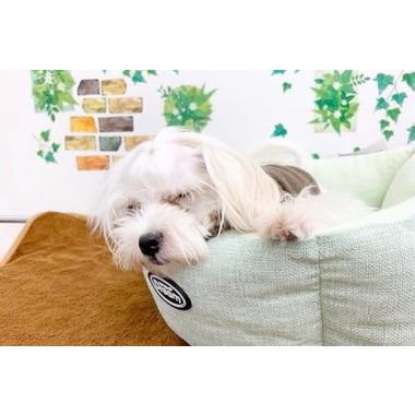 dog salon ao 金園店(ホテル)