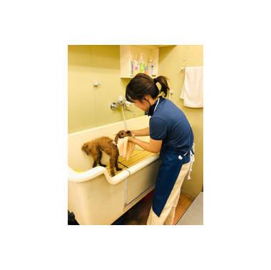 Dog salon AERU