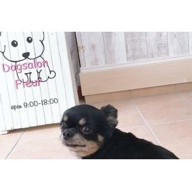 Dog salon Fleur