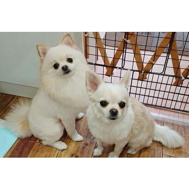 犬の美容室 MONTE
