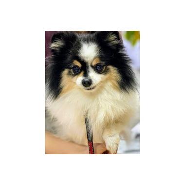Rian-dog(お宅訪問トリミング)