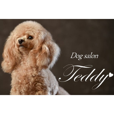 Pet Salon Teddy