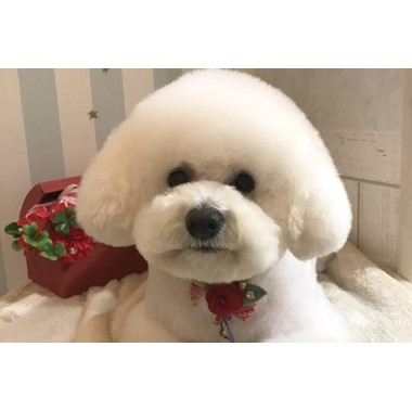 Dog salon Chou Chou