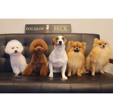 DOG SALON BECK ★1/6OPEN★