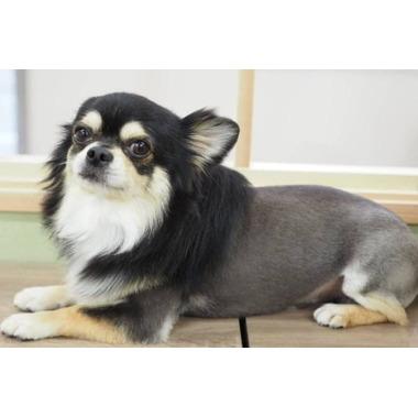 Dog Salon GRACE