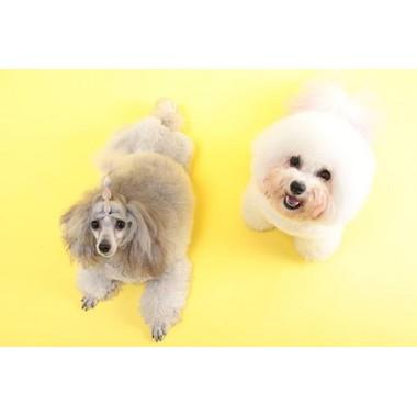 Cotton Dog&Cat