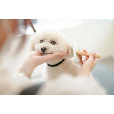 Dog Salon nonno