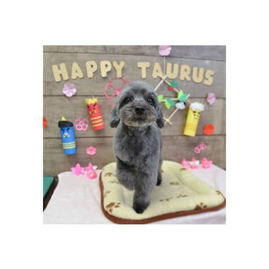 犬の専門店 ハッピートーラス