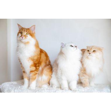 猫専門トリミングサロン Machicoro