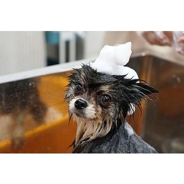 Dog care Labo HOPE